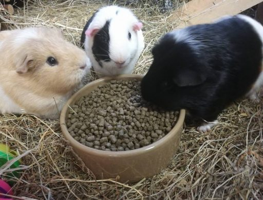 Piggie 10 - Clementine, Patches and Poppytu